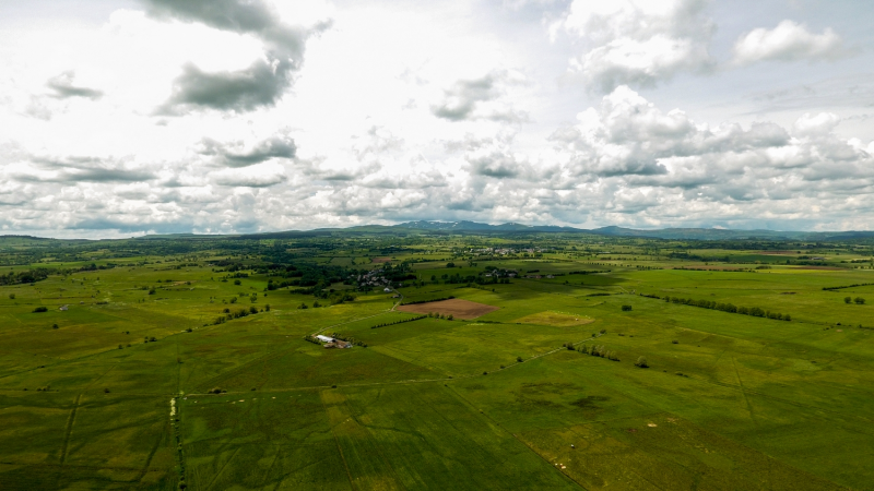 Cantal : À la découverte du courlis cendré