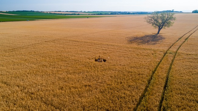 Impact imnime sur l'agriculture