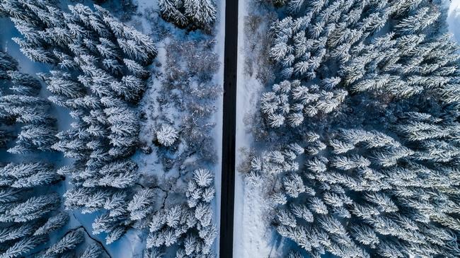 Route et Foret sous la neige