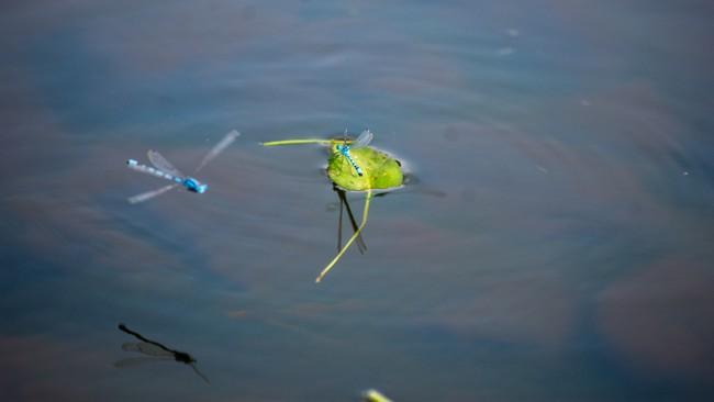 Concours régional de pêche en Auvergne Rhône Alpes - Pêche à la mouche